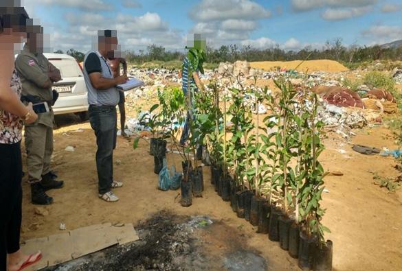 Crime ambiental: Centenas de mudas de árvores são destruídas após apreensão em Livramento