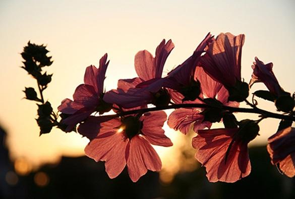 Primavera começa nesta sexta-feira (22) com calor e tempo seco