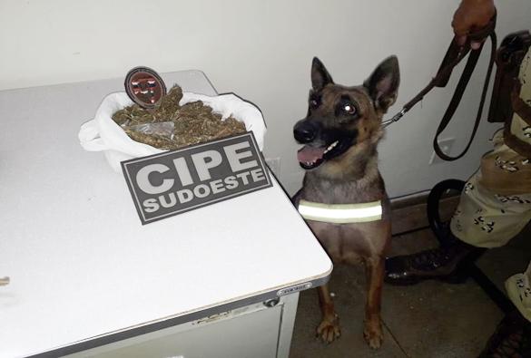 Com auxílio de cadela farejadora, PM localiza droga escondida em Livramento