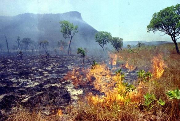Número de focos de incêndios aumentou na Bahia em relação ao ano passado