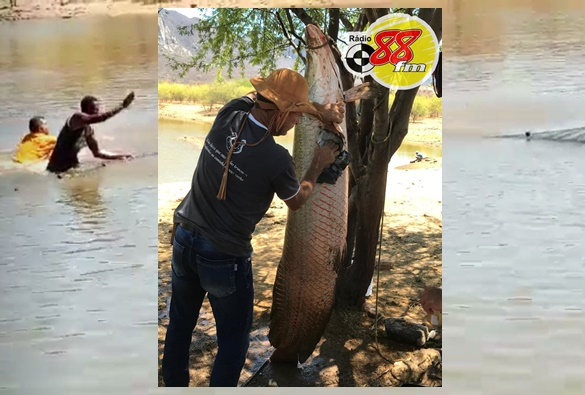 Não é conversa de pescador: Peixe de dois metros é capturado em tanque na zona rural de Livramento