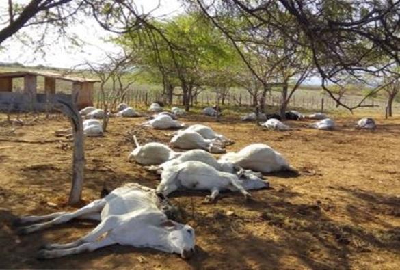 Tanhaçu: Mais de 50 animais aparecem mortos em fazenda