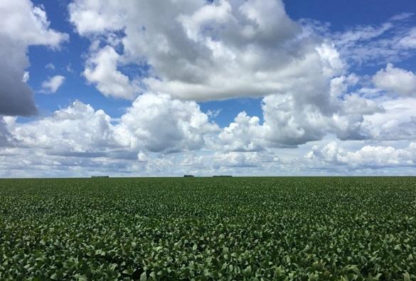 Prazo para plantio de soja no oeste da Bahia vai até 20 de janeiro