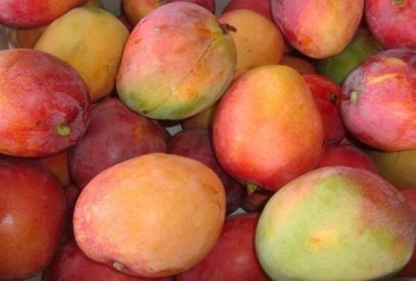Bahia é o 2º maior produtor de frutas do país