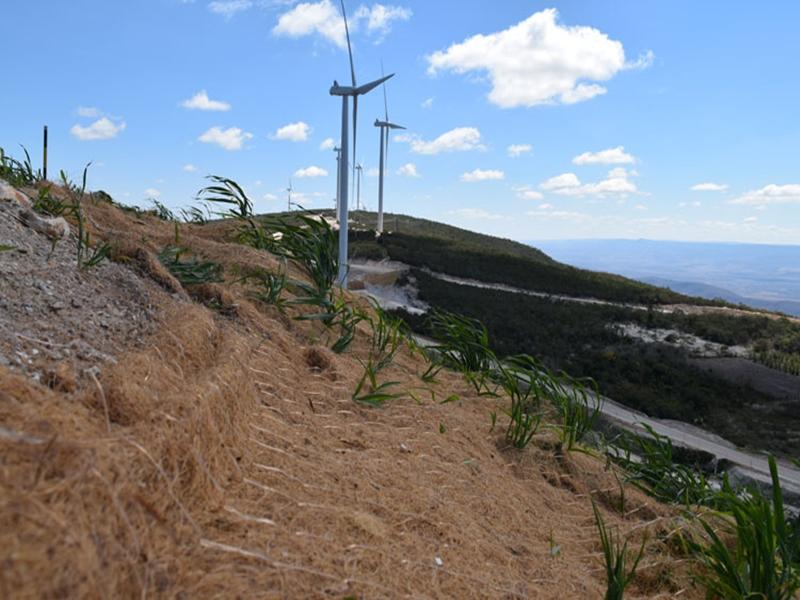 Empreendimento eólico faz replantio de árvores e plantas nativas na Serra das Araras em Brumado
