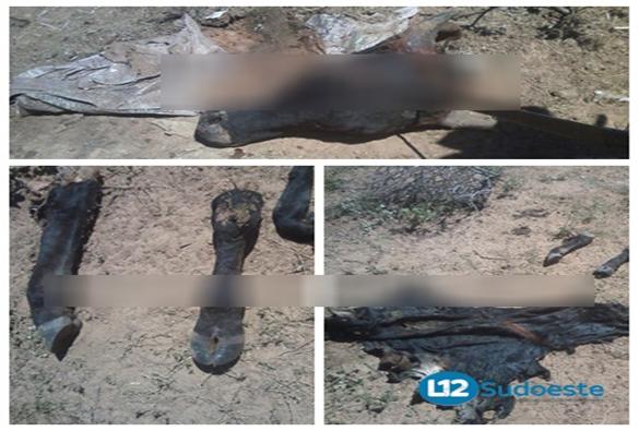 Bandidos invadem propriedade, mata animal e furtam carne em Livramento