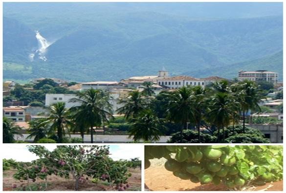 Livramento: Maior produtor de maracujá da Bahia; e segundo maior produtor de manga