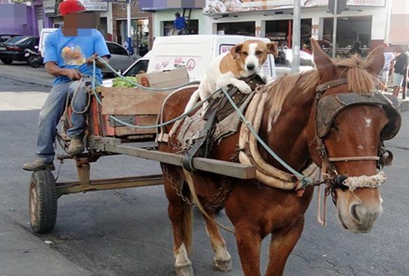 Vitória da Conquista: Prefeitura exige emplacamento e habilitação para carroceiros