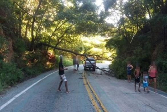 Árvore cai e obstrui pista da rodovia BA-148 na Serra das Almas